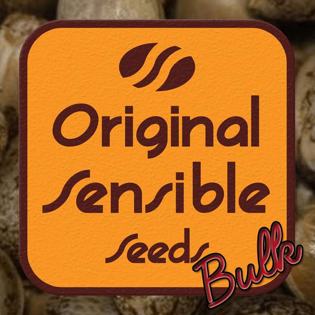 Buy Original Sensible Seeds Critical Kush FEM