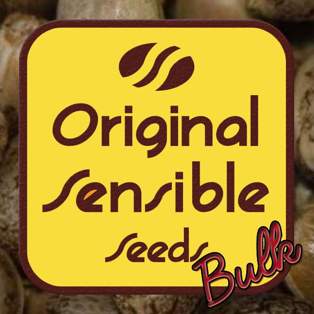 Buy Original Sensible Seeds Blueberry XXL Auto FEM