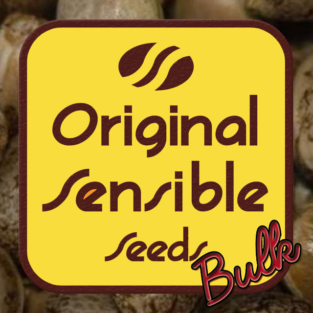 Buy Original Sensible Seeds Big Bud Auto FEM