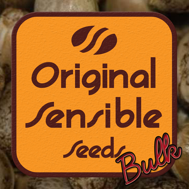 Buy Original Sensible Seeds Californian Orange Bud FEM