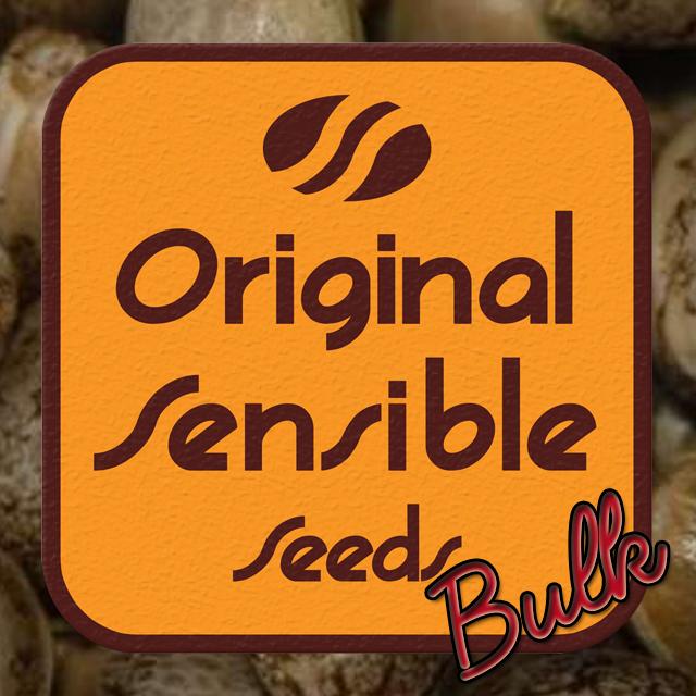 Buy Original Sensible Seeds NY Diesel FEM