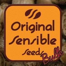 Bulk Cannabis Seeds | Cheese